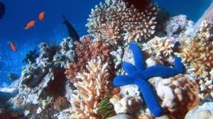 Great Barrier Reef: Under Threat